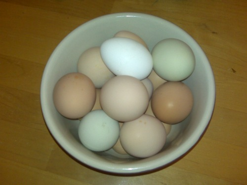 Eggs from all 5 girls - I can even tell who lays which of the brown ones!