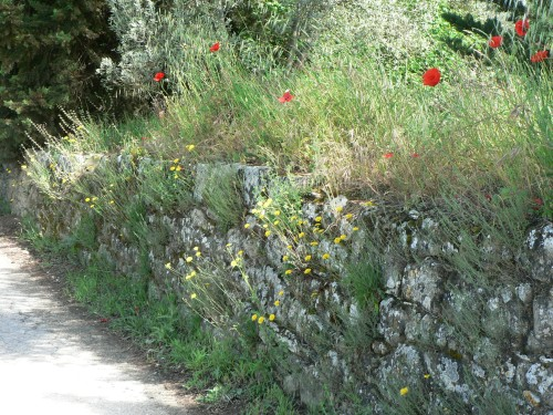 An old stone wall along a Tuscan roadside. I found fennel, thyme and other herbs growing in between these stones. The landscape is a giant pantry!