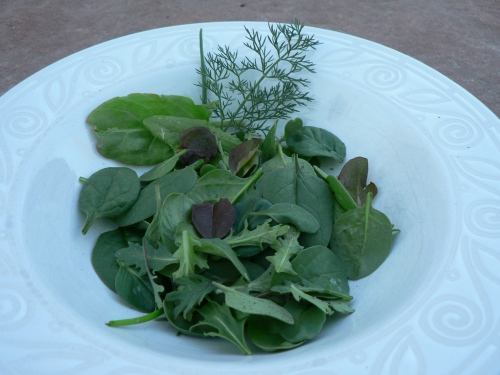 First spring salad of tiny baby greens