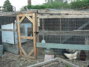 Our 6-bird coop (currently inhabited by 4).