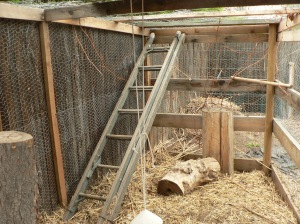Jungle gym for chickens: lots to climb and perch on.