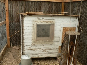 The very shoddy-looking but functional coop.